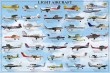 LIGHT AIRCRAFT POSTER